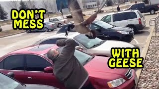 Don't Mess with Geese Compilation [NEW]