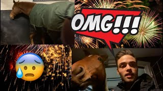 horses-fireworks-this-is-how-it-went