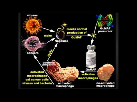 1. GcMAF = The Cure for Cancer