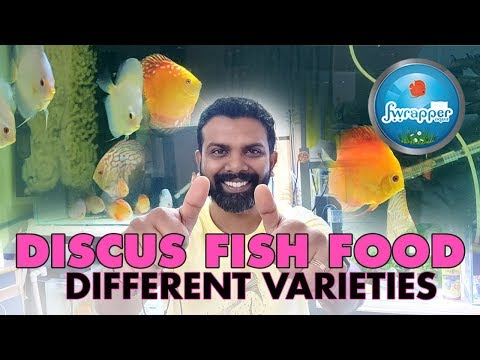 Different Types Of Discus Fish Food