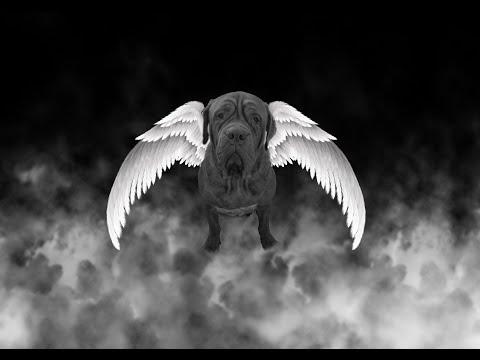 Angel Memorial - A beautiful Dogue.