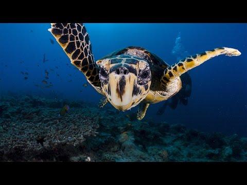 Wildlife Crime Tech Challenge: Paso Pacifico is saving sea turtles
