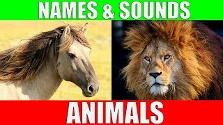 ANIMAL NAMES AND SOUNDS for Kids Video Compilation - Learn Animal Names for Children & Toddlers