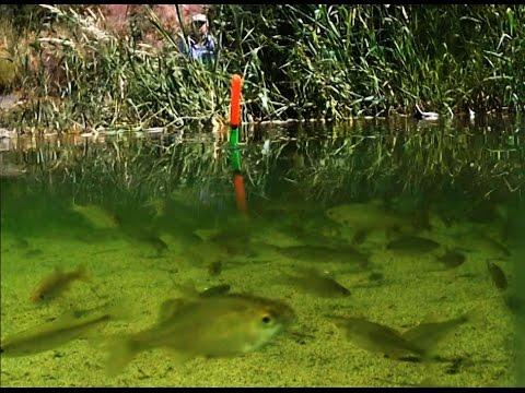 ловля на червя на озере