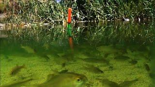 Рыбалка, поплавочная удочка, на озере, насадка: червь, опарыш.подводные съемки. fishing
