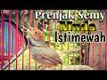 Suara Prenjak Semi Gacor Narung Masteran Prenjak  Mp3 - Mp4 Download