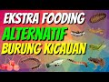 Ekstra Fooding Ef Alternatif Untuk Burung Kicau  Mp3 - Mp4 Download