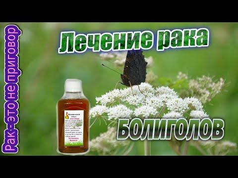 Лечение рака болиголов