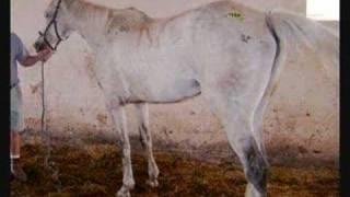 Horse Rescue Ad - Gray Horse (2)