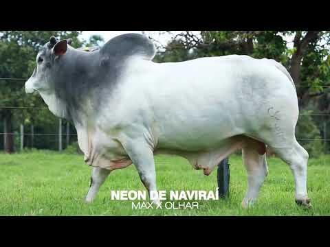 LOTE 04 - NEON DE NAVIRAÍ