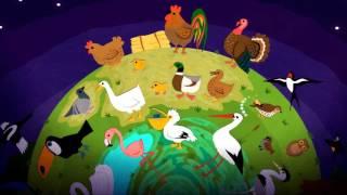 Развивающий мультик для самых маленьких детей животные на русском. Птицы Часть 1