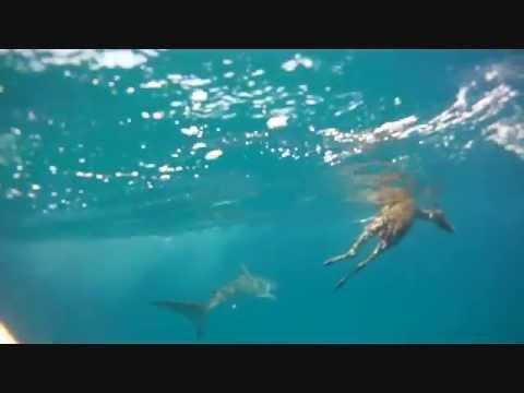 Ninho - B**** Dab (Clip officiel)de YouTube · Durée:  4 minutes 17 secondes