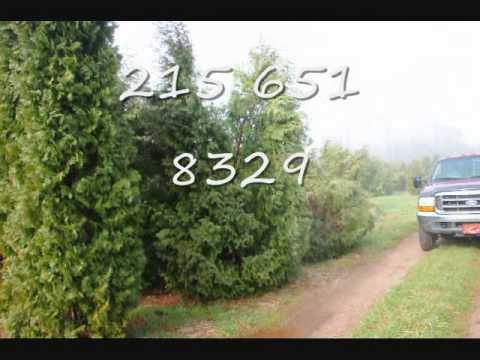 Vvv Xxx Aaa Video Selling My 4 Ft Evergreens In Bucks County