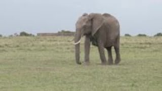 CITES votes to keep ban on sales in ivory