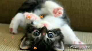 милые животные !!