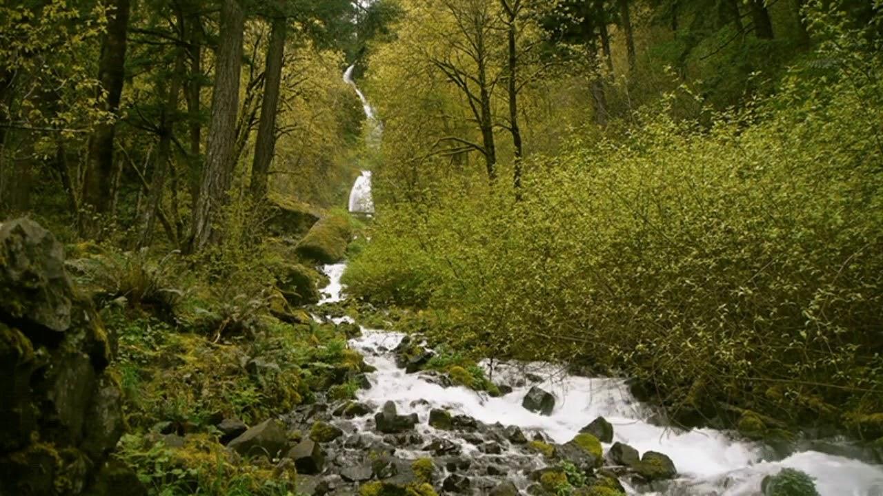 необычной гифки живые картинки живописный ручей несколько советов, чтобы