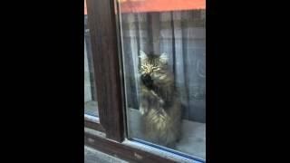 Свободу коту