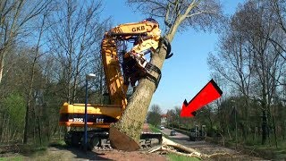 Modern Long Reach Tree Felling Vehicle ! Most Satisfying Cutting Down Old Tree Machines in the city