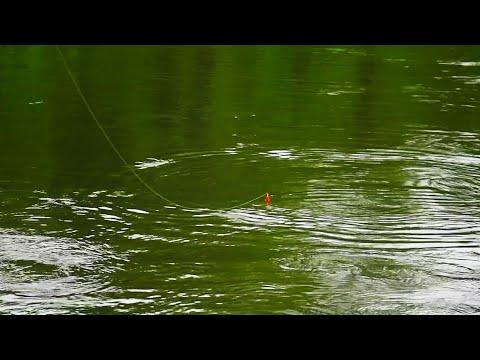 FIRST Fall Steelhead BOBBER DOWNS! - Float Fishing 2020