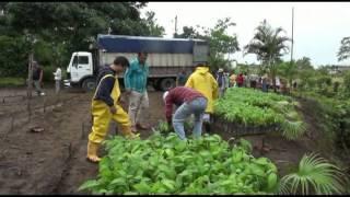ENTREGA DE PLANTAS DE CACAO A BENEFICIARIOS DEL CANTON PEDRO VICENTE MALDONADO