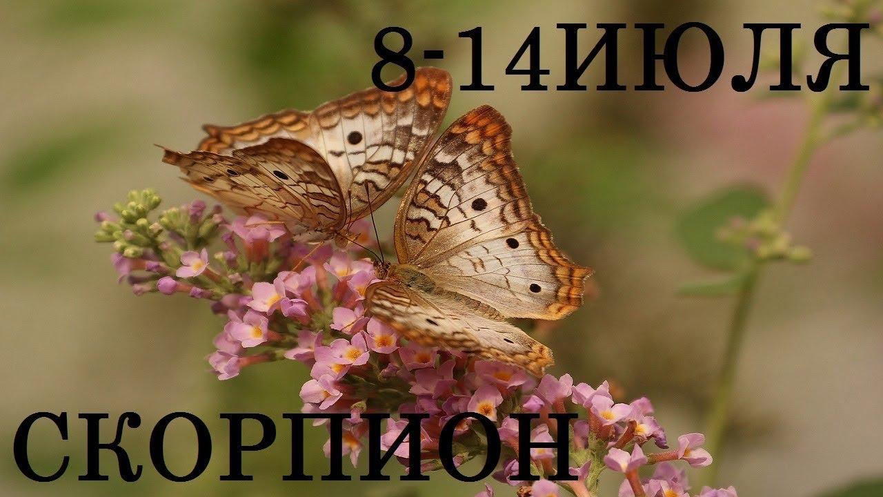 СКОРПИОН Таро прогноз 8-14 ИЮЛЯ Онлайн гадание