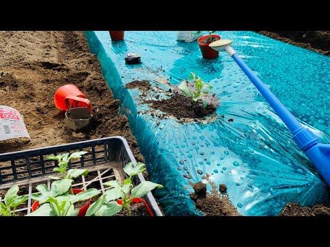 スイカ 栽培 方法