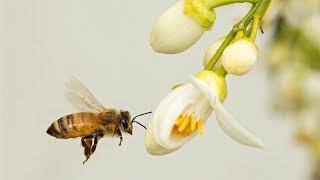 У штаб-квартиры ООН поселились пчёлы-беженцы (новости)