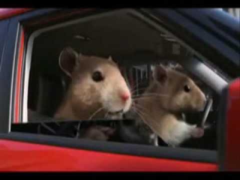 Kia Soul (Hamster) Commercial - YouTube