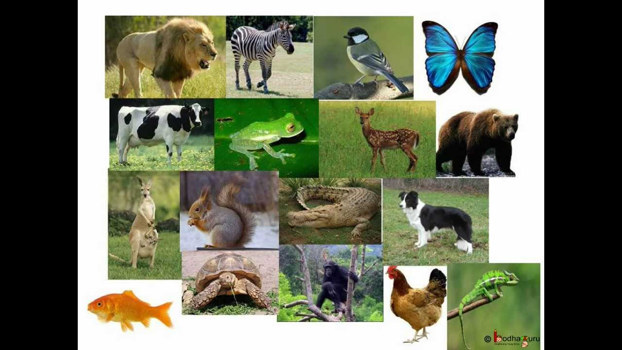 Science - Animal reproduction, Egg laying animal and Mammals ...