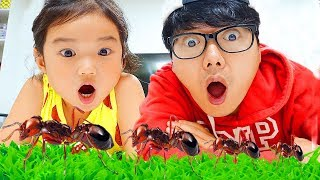 Insects and Bugs for Kids Learning with Boram