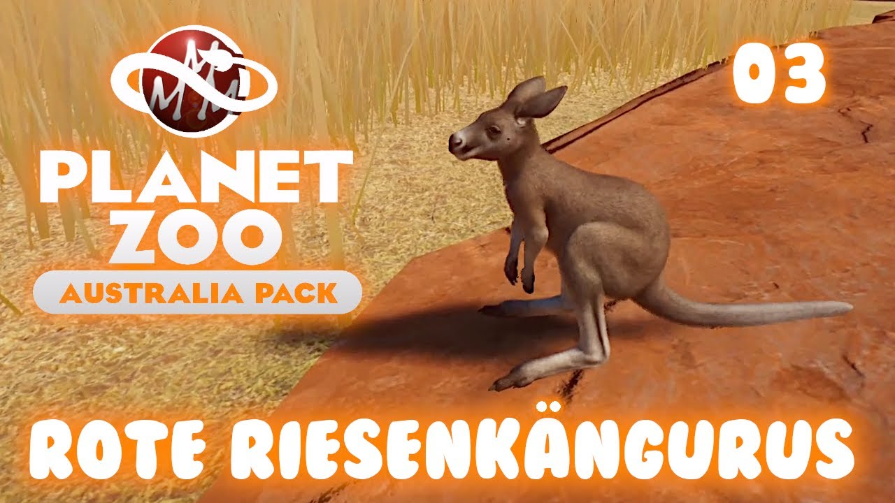 PLANET ZOO • Australien Paket • 03: Rote Riesenkängurus