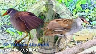 SP. TIKUSAN ALIS PUTIH__Terbaru 2019 MP3