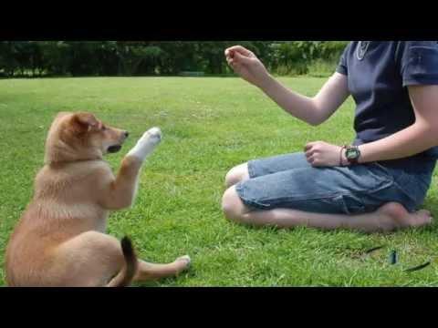 adiestramiento-canino--cognitivo-emocional