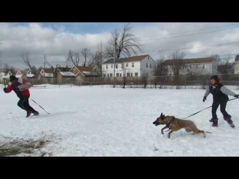 Crockett,Lazko,Hunter training at Hamptonsk9