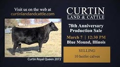 Curtin Land & Cattle: 78th Anniversary Production Sale