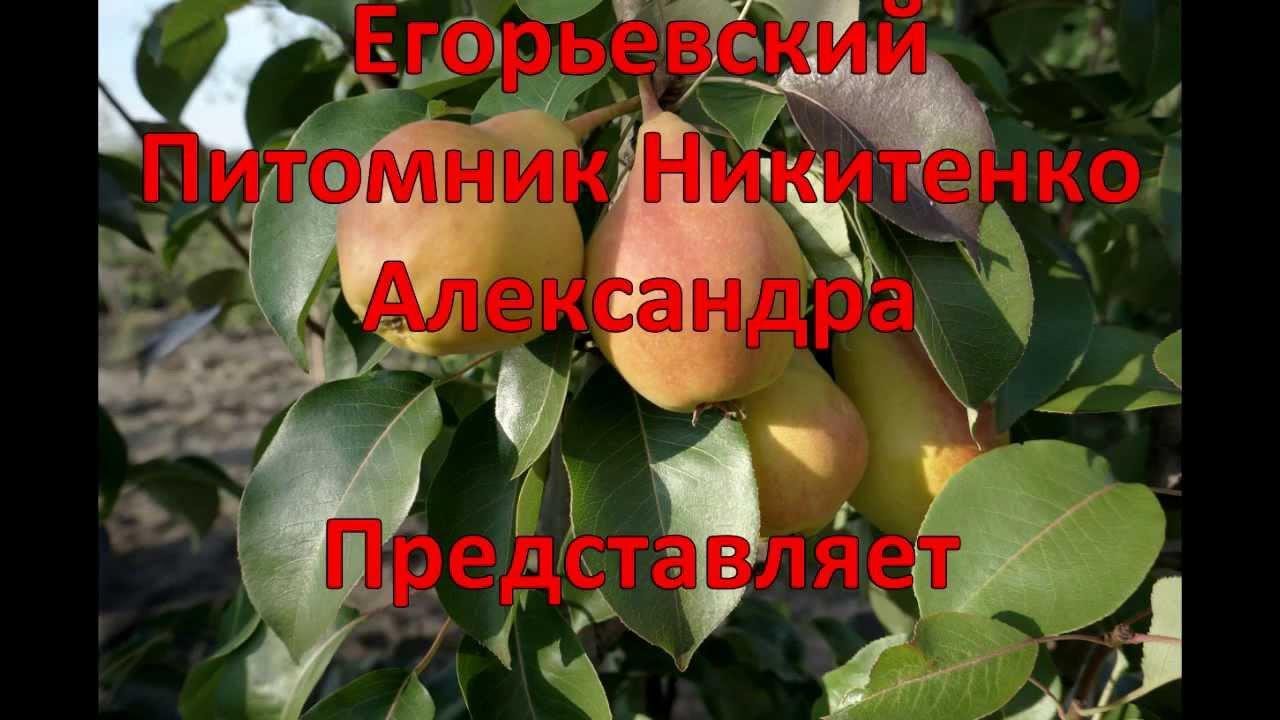 Удобрение бокаши купить в москве цена - YouTube