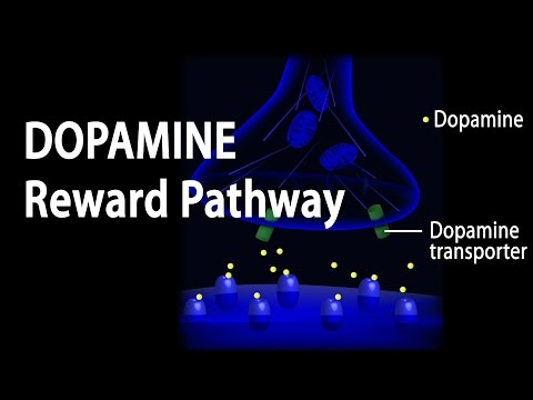 alcohol addiction pathway