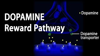 Neuroscience Basics: Dopamine Reward Pathway, Animation.