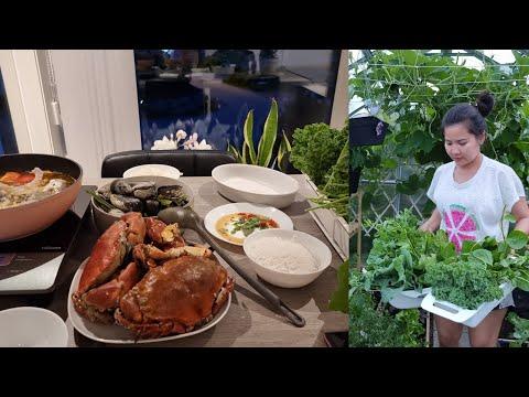 Vlog 244🇧🇻 Vườn rau Việt trên xứ lạnh | Buổi tối của Gia đình nhỏ hái rau vào nhúng lẩu chua