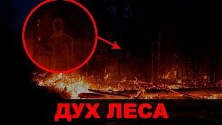 ВЫЗОВ ДУХОВ - ДУХ ЛЕСА / ЧУТЬ НЕ СГОРЕЛ ЛЕС!