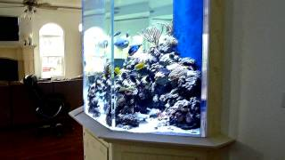Huge Fish Tank (custom 1500 Gallon Coral Reef Aquarium)