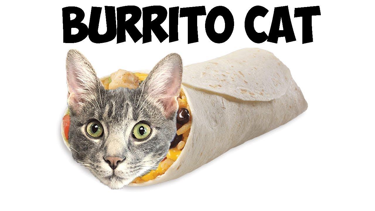 Animal Blind Bags Burrito Cat Cutetitos Plush Burritos Youtube
