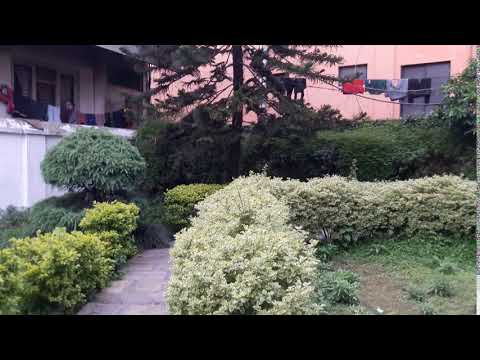 Thamel Eco Resort Where Aayurvedic Herbal products with Yoga Treatment is available.