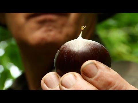 A Low Tech Organic Chestnut Farmer