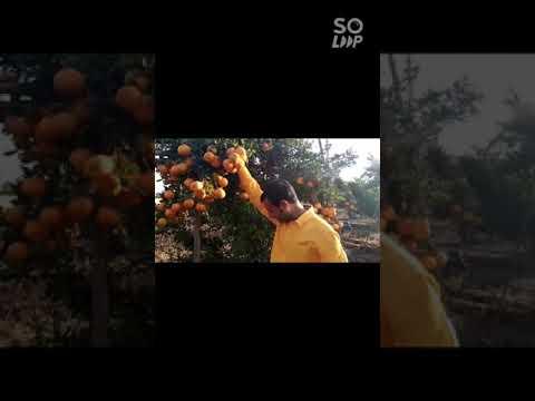 Orange Farming Use technology correctly #UHDP #UHDPMANGO #kesarmango indoisraeltech5858@Gmail.com