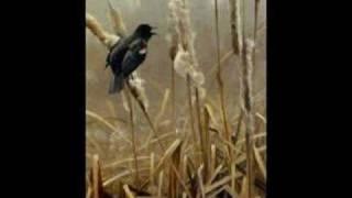 """""""Blackbird"""" - Jeff Beck"""