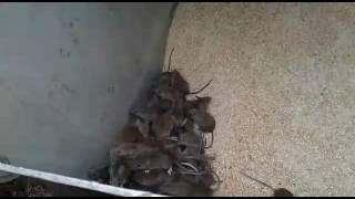 Кошка боится мышей