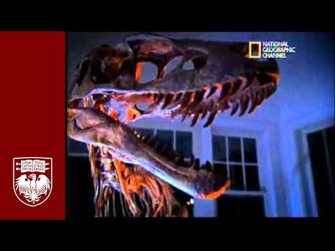 Raptorex: A miniature T. rex
