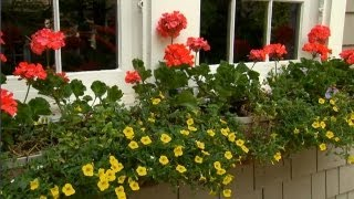 Window Box Container Gardening | P. Allen Smith Classics