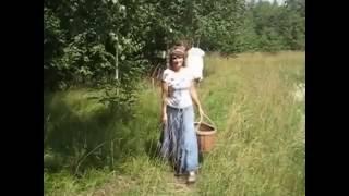 Иван чай Оптом от производителя. Кипрей, Копорский. Цена...